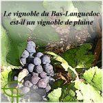Le vignoble du Bas-Languedoc est-il un vignoble de plaine ?