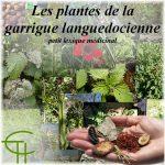 Les plantes de la garrigue languedocienne: petit lexique médicinal