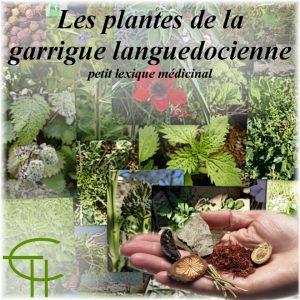 1982-3b-02-les-plantes-de-la-garrigue-languedocienne-petit-lexique-medicinal