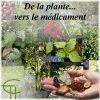 De la plante… vers le médicament