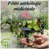 Petite anthologie médicinale muséobus 2e trimestre 1982