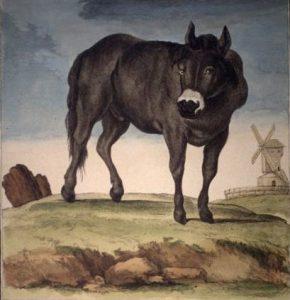 Jumart, animal domestique issu du croisement de deux mammifères appartenant à des ordres et familles différents