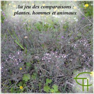 1995-1996-25-au-jeu-des-comparaisons-plantes-hommes-et-animaux
