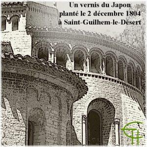 2004-2005-07-un-vernis-du-japon-plante-le-2-decembre-1804-a-saint-guilhem-le-desert
