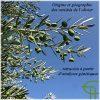 Origine et géographie des variétés de l'olivier retracées à partir d'analyses génétiques