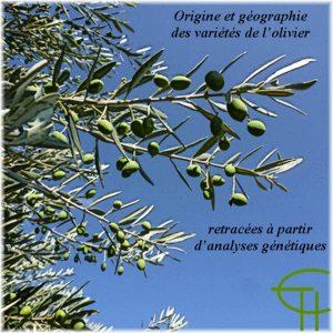 2009-b02-origine-et-geographie-des-varietes-de-l-olivier-retracees-a-partir-d-analyses-genetiques