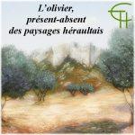L'olivier, présent-absent des paysages héraultais