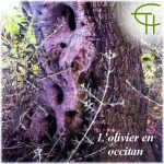 L'olivier en occitan