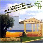 Le renouveau de l'olivier en Hérault, entre ville et campagne